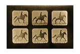 Horses Irregular  'Animal Locomotion' Series  C1881