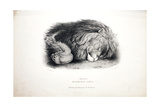 Sketches of Animals at the Zoological Gardens