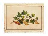 Gooseberries  1818