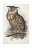 Eagle Owl  Bubo Maximus  1832-1837