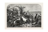 Salon of 1855  Goats  1855