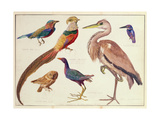 Studies of Birds from the Bootle Museum  Liverpool