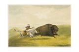 Buffalo Hunt Chase