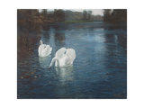 Swans on the River  C1880