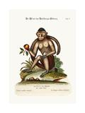 The Bush-Tailed Monkey  1749-73