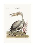 The Pelican  1749-73