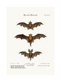 Three Small Bats  1749-73