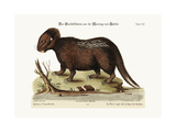 The Porcupine from Hudson's Bay  1749-73