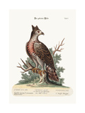 The Crowned Eagle  1749-73