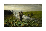 The Pumpkin Harvest  1897