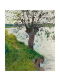 Willow by the River; Saule Au Bord De La Riviere  C 1891