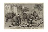 Elephants Demolishing a Stockade  Wontho  Upper Burma