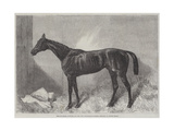The Marquis  Winner of the Two Thousand Guineas Stakes at Newmarket
