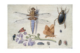 A Cockchafer  Beetle  Woodlice and Other Insects  with a Sprig of Auricula  Early 1650S