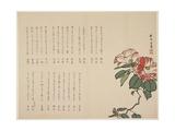 Flowering Camellia  C1818-1829