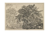 The Great Beech with Two Men and a Dog  C 1650-1655