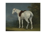 A Lady's Grey Hunter  C1806