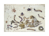 Various Spiders and Caterpillars  with a Sprig of Gooseberry  Early 1650S