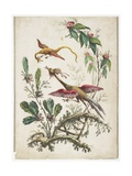 Ornament Chinoiserie Flowers and Birds  1770