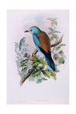 European Roller; Coracias Garrula  1862-1873 (Hand-Finished Colour Lithograph)