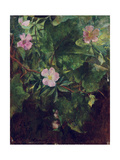 Wild Rose and Grape Vine  Study from Nature  1871