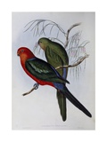 Australian King Parrot (Alisterus Scapularis) (1804-1881) and Henry Constantine Richter (1821-1902)