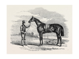 Foigh-A-Ballagh  the Winner of the Great St Leger and Grand Duke Michael Stakes