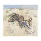 Tangier  1887