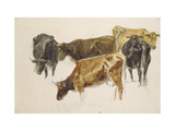 Study of a Group of Cows  C 1801