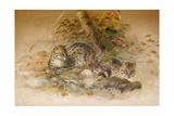 Wagati Cat  1851-69