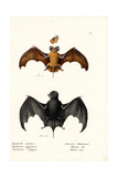 Egyptian Free-Tailed Bat  1824