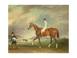 The Cur Chestnut Racehorse with Jockey Up on Newmarket Heath