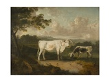 Kenwood  Lord Mansfield's Pedigree Cattle  1797