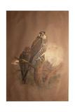 Saker Falcon (Falco Sacer)  1856-67