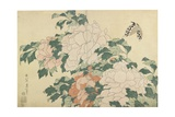 Peonies and Butterfly  C 1830-1831