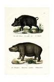 Wild Boar  1824
