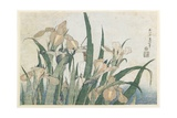 Iris Flowers and Grasshopper  C1830-31