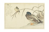 Mallards and a Kingfisher  1790