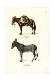 Donkey  1824