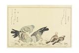 Tree Sparrow and Rock Dove  C 1790
