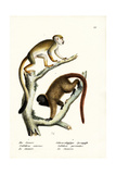 Squirrel Monkeys  1824