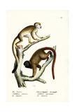 Squirrel Monkeys  1824