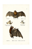 Spear-Nosed Bats  1824