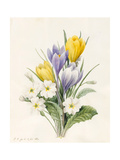 White Primroses and Early Hybrid Crocuses  1830