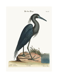 The Blue Heron  1749-73