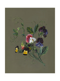 Sweet Peas (Quitro) and Violas  1830 (W/C and Bodycolour on Paper with a Prepared Ground)