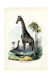 Giraffe  1863-79