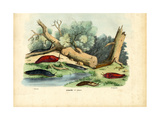 Limax Snail  1863-79