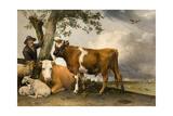 The Bull  1647