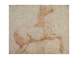 Study of One of the Quirinal Marble Horses  C1515-17